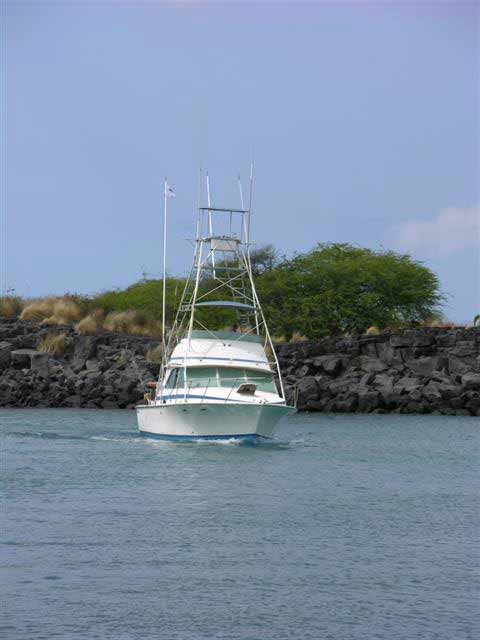 Hawaii Kona Sport Fishing -blue marlin big game fishing