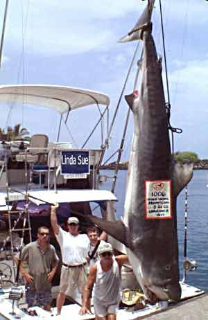 Kona fishing 500lb club details for hawaii fishing kona for Kona fishing charters